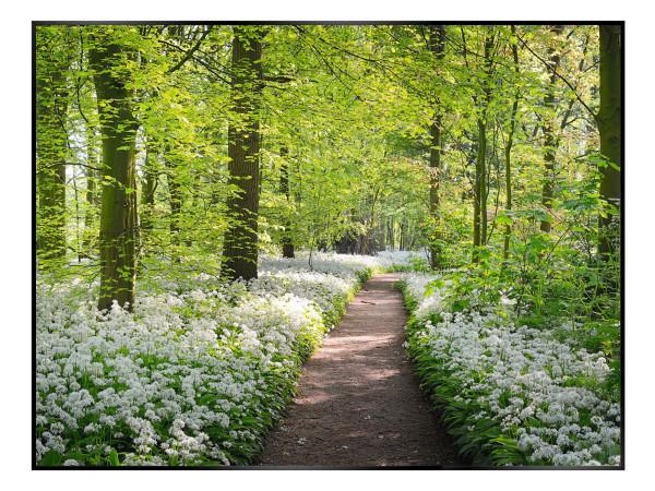 Bild WHITE FLOWER FOREST