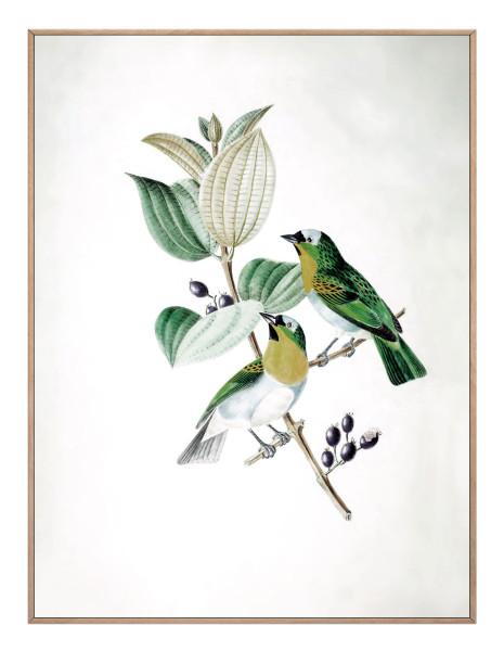 Bild BOTANICAL BIRDS