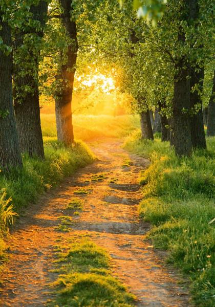 Bild AUTUMN FOREST